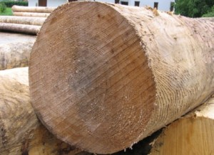 legno-taglio-a-420x306