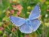 Farfalle del Veneto, un incontro pubblico perscoprirle