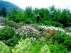 Alla scoperta della fioritura dellerose