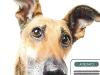 """Corso di formazione per proprietari di cani e per l'acquisizione del """"patentino"""""""